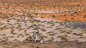 沙漠中的骆驼商队(毛利塔尼亚,北非)