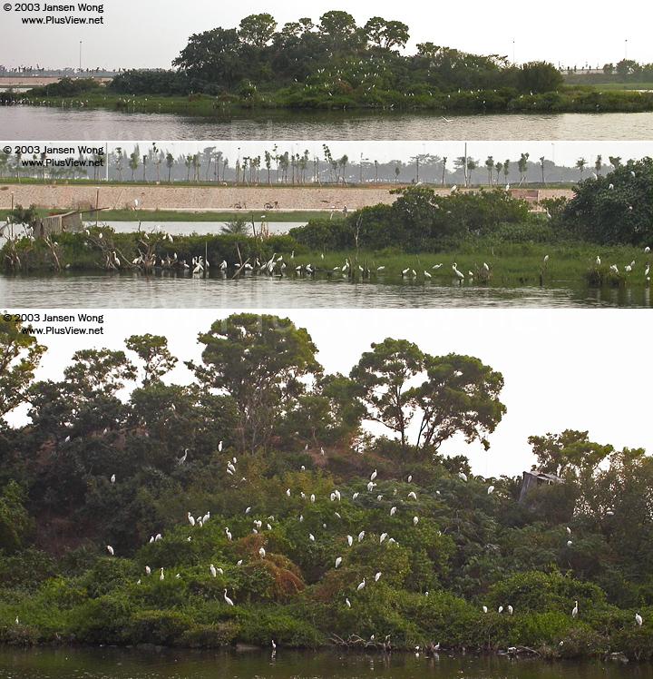 从华侨城湿地北湖的北岸看湖心岛