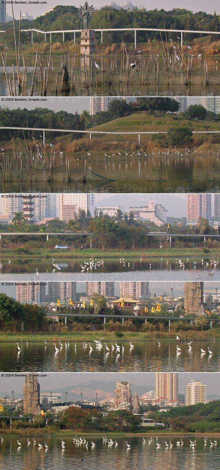 从南岸白石路桥以东,看华侨城湿地北湖的东部区域
