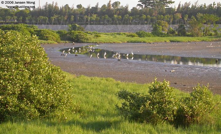 从北岸看湖的最东角。华侨城湿地北湖的东段有大面积干涸