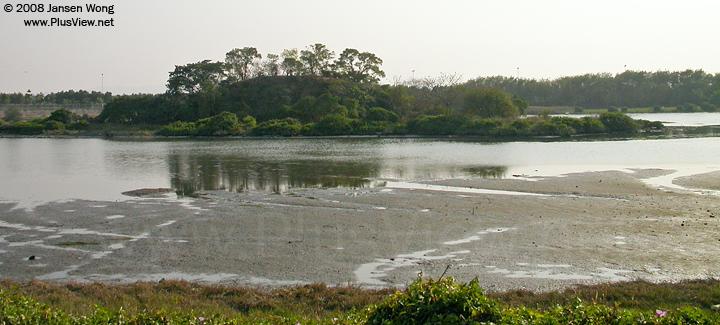 华侨城湿地北湖北岸边的湖面也有不少已经露出淤泥