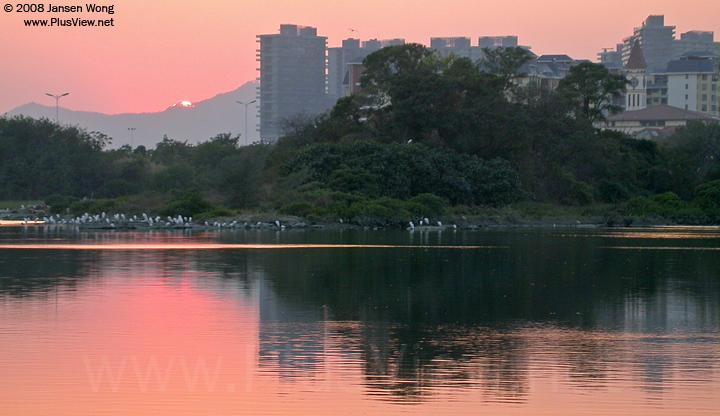 华侨城湿地湖心岛北侧边上停留了60来只白鹭