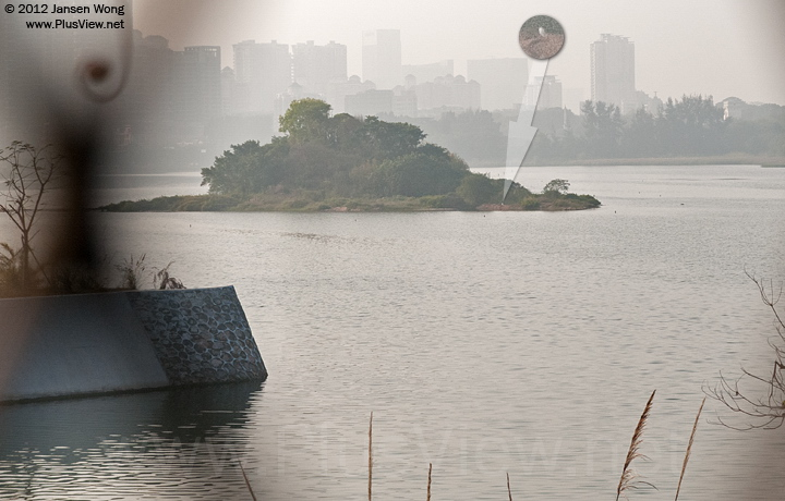 华侨城湿地北湖湖心岛周边只发现一只白鹭