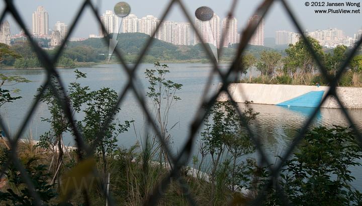 华侨城湿地北湖的中部局部水域发现2只白鹭