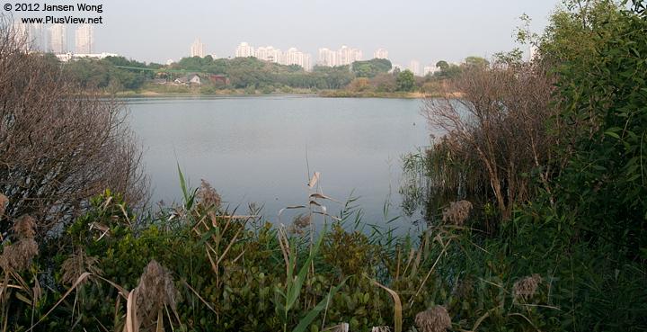 华侨城湿地北湖的西面部分水域及湖心岛西端