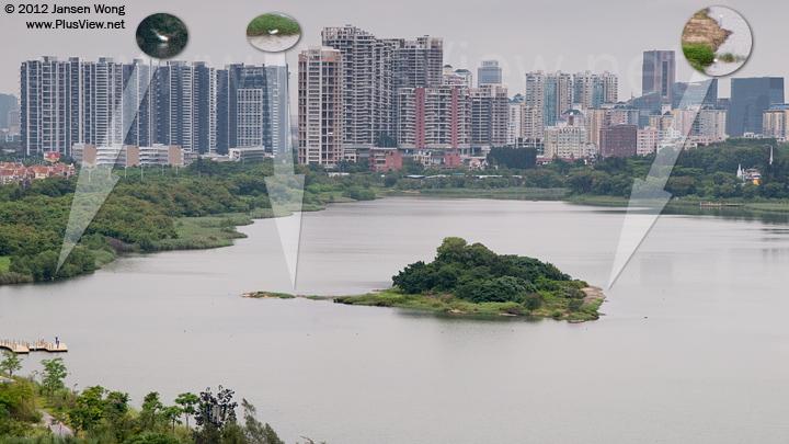 从华侨城湿地北湖的东南面高处看湖的中部及西部