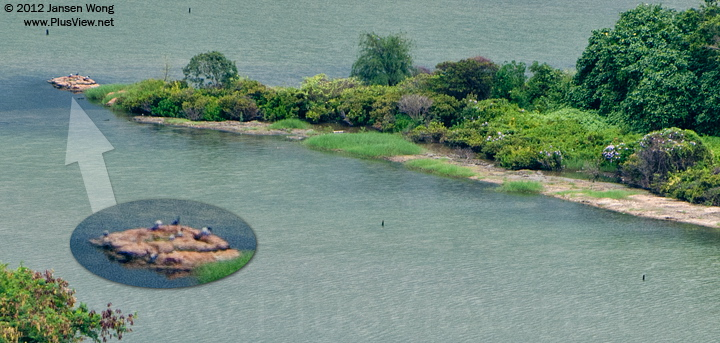 华侨城湿地北湖湖心岛的东侧延伸部分