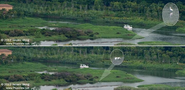 白色游艇开往华侨城湿地北湖东南角的船坞途中,浅滩上距离游艇较近的一只白鹭被惊起